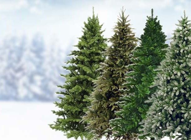 Léveillé conseil | L'exportation de sapin de Noël